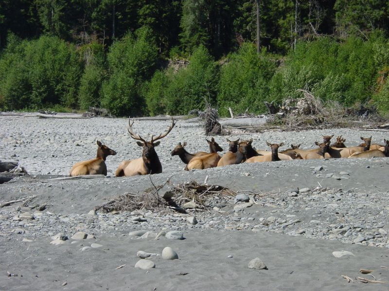 The herd rests on the warm sand