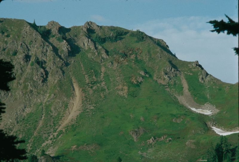 The herd grazes high on the mountainside
