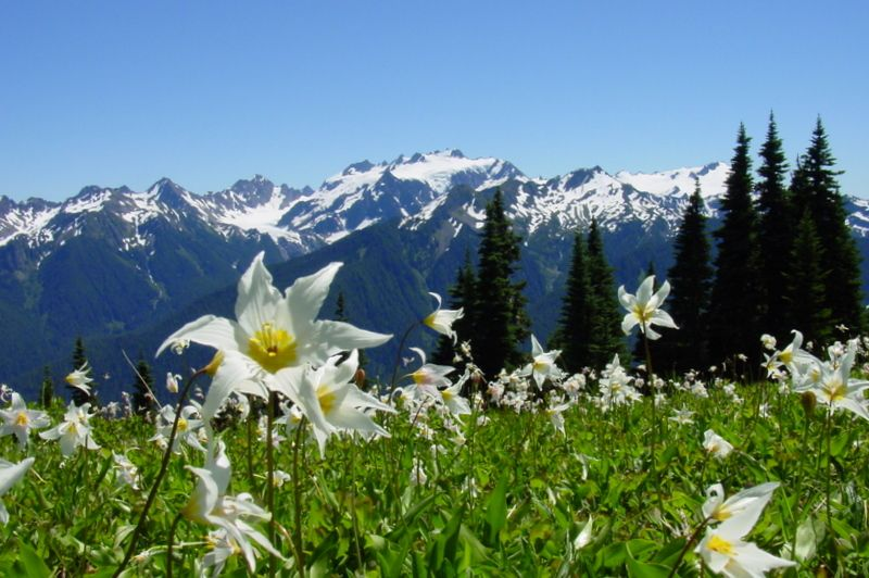 Photo Gallery-Mountains